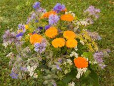 Bienenweide (Bee pasture) – buy organic seeds online - Bingenheim Online Shop