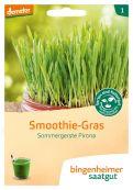 Smoothie-Gras - Bio-Samen online kaufen - Bingenheim Biosaatgut