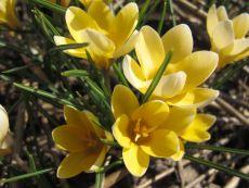 Romance – buy organic seeds online - Bingenheim Online Shop