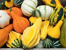 Zierkürbis/Mischung (Ornamental gourd) – buy organic seeds online - Bingenheim Online Shop