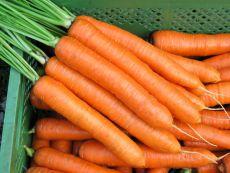 Robila - Bio-Samen online kaufen - Bingenheim Biosaatgut