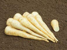 Aromata – buy organic seeds online - Bingenheim Online Shop