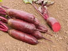 Forono – buy organic seeds online - Bingenheim Online Shop