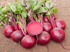 Jannis – buy organic seeds online - Bingenheim Online Shop