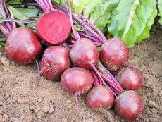 Robuschka – buy organic seeds online - Bingenheim Online Shop