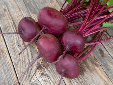 Ägyptische plattrunde – buy organic seeds online - Bingenheim Online Shop