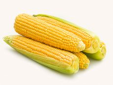Damaun (AS) (früh) - Bio-Samen online kaufen - Bingenheim Biosaatgut