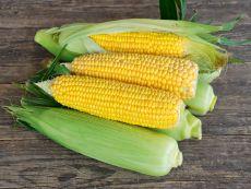Mezdi (AS) (mittel) – buy organic seeds online - Bingenheim Online Shop