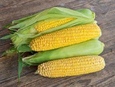 Tramunt (AS) (spät) – buy organic seeds online - Bingenheim Online Shop