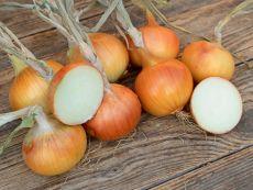 Rijnsburg 5/Bajosta – buy organic seeds online - Bingenheim Online Shop