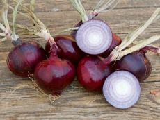 Robelja – buy organic seeds online - Bingenheim Online Shop