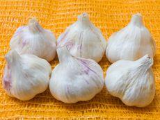 Thermidrome – buy organic seeds online - Bingenheim Online Shop