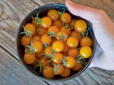 Golden Currant - Bio-Samen online kaufen - Bingenheim Biosaatgut