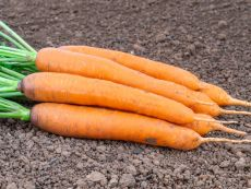 Dolciva – buy organic seeds online - Bingenheim Online Shop