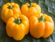 Afrodita - Bio-Samen online kaufen - Bingenheim Biosaatgut