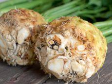 Porthos – buy organic seeds online - Bingenheim Online Shop