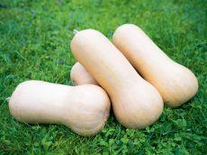 Nutterbutter - Bio-Samen online kaufen - Bingenheim Biosaatgut