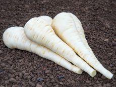 Schleswiger Schnee – buy organic seeds online - Bingenheim Online Shop