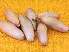 Cuisse de Poulet – buy organic seeds online - Bingenheim Online Shop