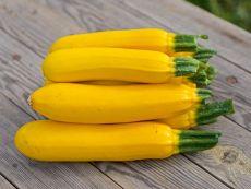 Solara (KS-KUP-KB-gelb1) (AS) - Bio-Samen online kaufen - Bingenheim Biosaatgut