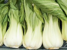 Yorokobi – buy organic seeds online - Bingenheim Online Shop