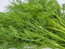 Dill - Bio-Samen online kaufen - Bingenheim Biosaatgut
