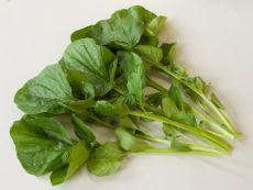 Winterkresse - Bio-Samen online kaufen - Bingenheim Biosaatgut