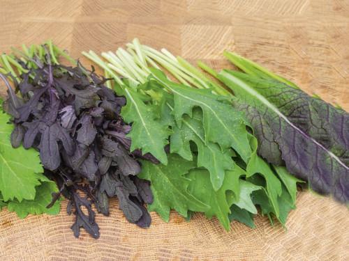 Asia-Salat Baby-Leaf
