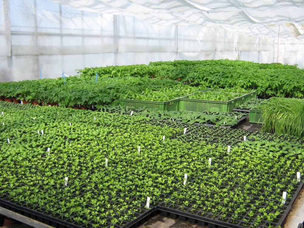 Jungpflanzen, Hof Apfeltraum